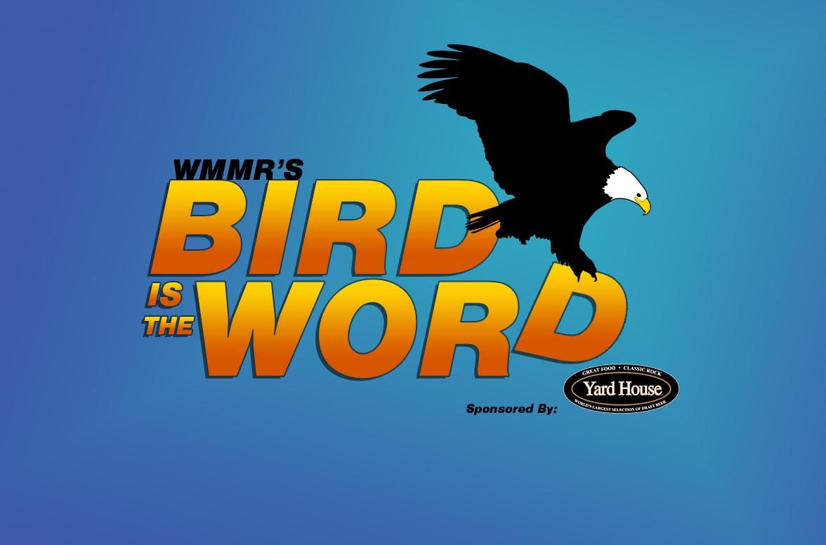 Bird scares: the principle of action, description and reviews