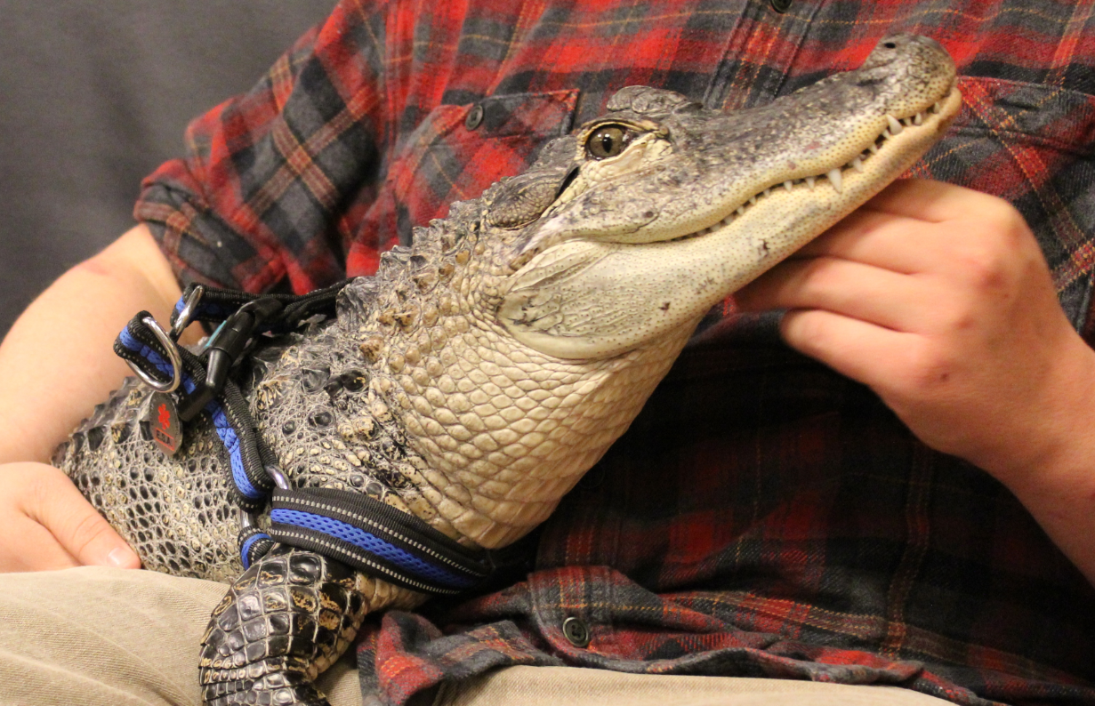 PHOTOS: Meet Wally, the Emotional Support Alligator